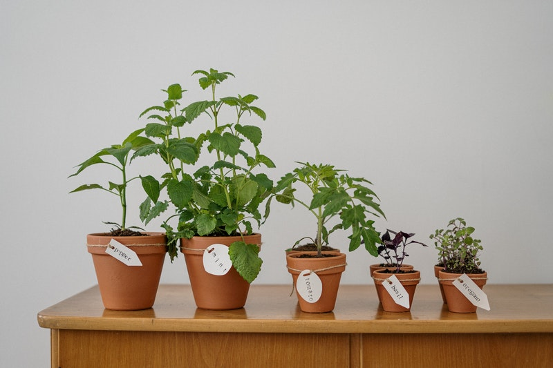 Gardening Ideas – A Brief Look At