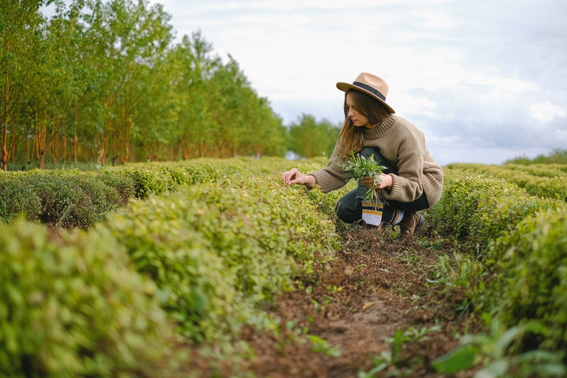 What Is An Environmental Educator?